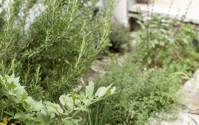 ガーデニングをする時にどうしても手こずってしまうのが雑草。雑草対策で植物を植えるなら、他にも活用できたりするハーブを植えませんか?グランドカバーに使えるハーブを紹介します。 | 1ページ目