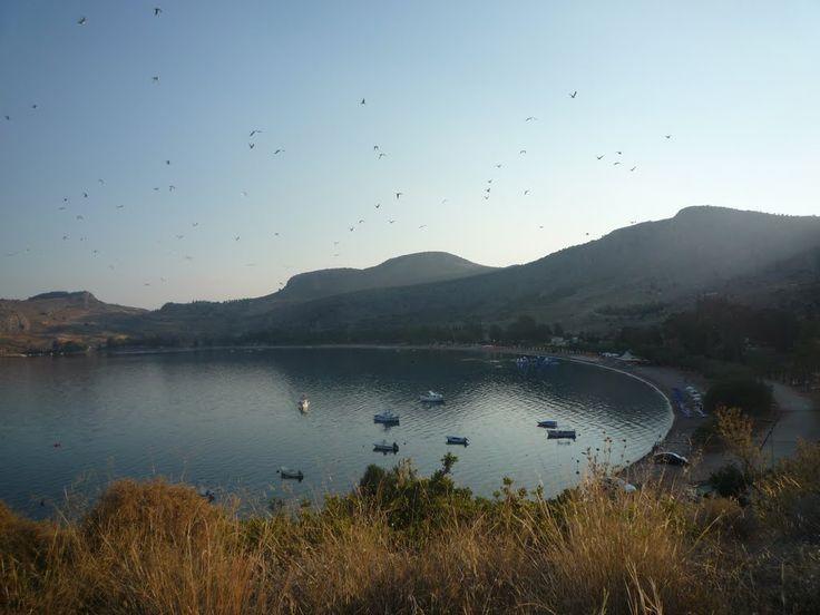 morning birds karathona nayplio