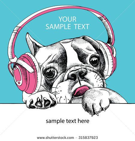 Portrait of French bulldog with pink headphones on a blue background. Vector illustration.