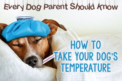 What Every Dog Parent Should Know: Taking Your Dog's Temperature | eBay