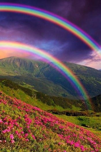 花畑に映える美しい虹。