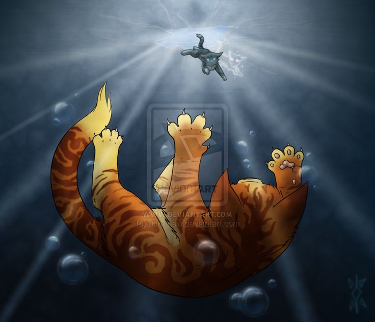 28 Best Warrior Cats Images On Pinterest