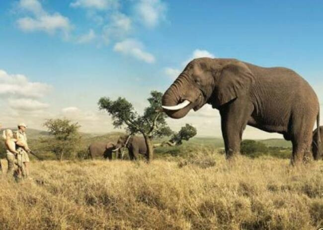 Google Image Result for http://www.africanbluesky.com/Elephant___Guide_renamed_21807.jpgAfrican Elephant, African Photos, Bucketlist, Adventure, African Safari Check, Buckets Lists, Places I D, National Parks, African Deserts