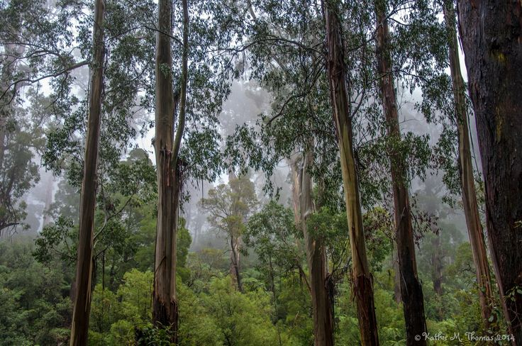 A misty day in the Ranges