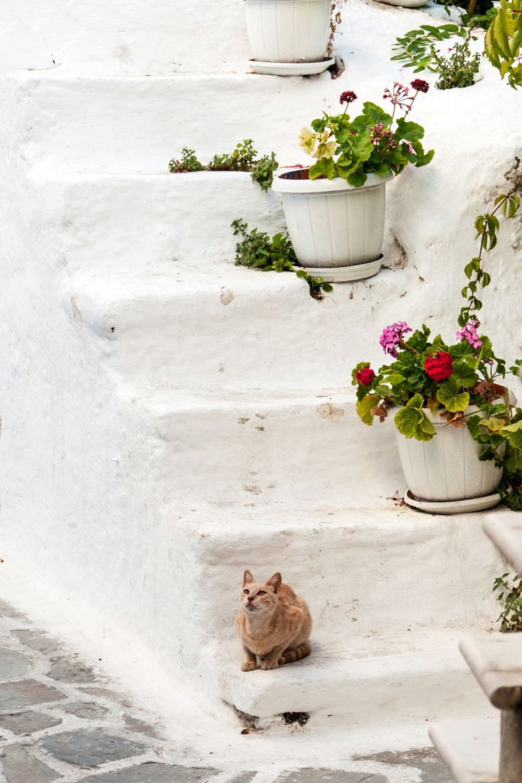 Kitten & flowers, Naxos, Greece