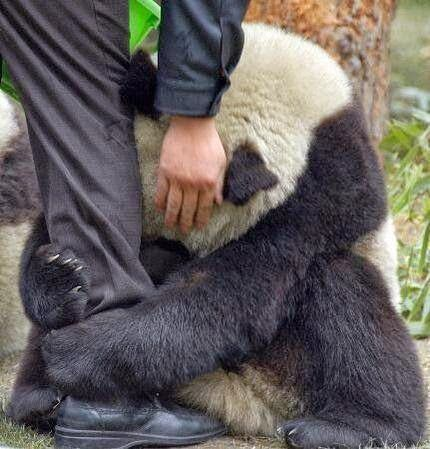 A scared #panda holds onto a police officer after an #earthquake