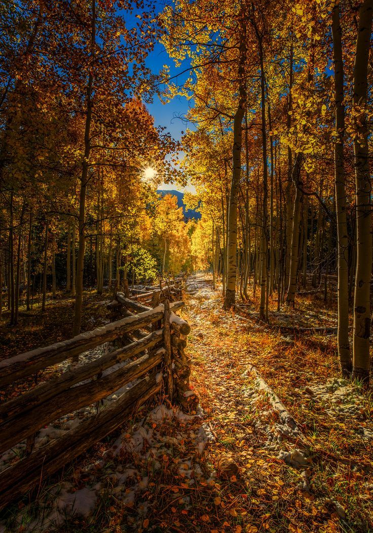 AUTUMN LEAVES ON STONE PATH    The Fall Path, Colorado, by Toby Harriman