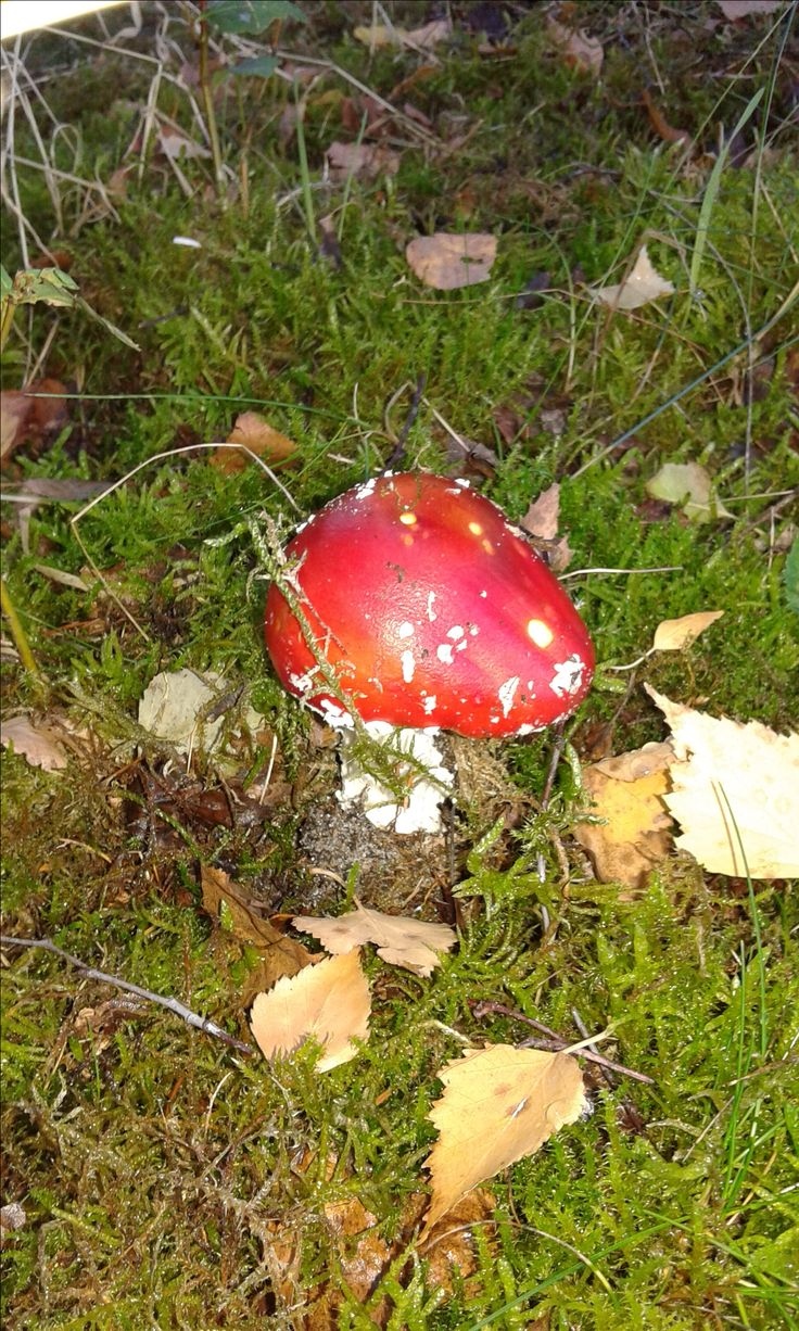 Mushroom in September