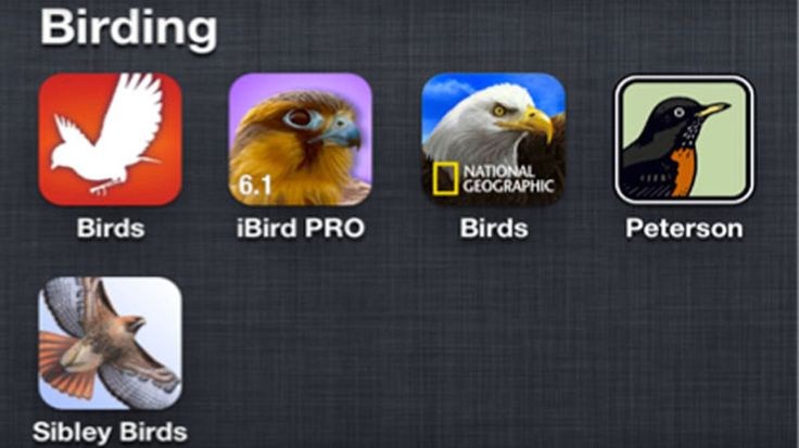 """Need an app that helps you identify birds in the field? Don't bother searching for """"birds"""" in any app store. Unless that thrush happens to be angry, those dozens of Angry Bird apps that pop up won'…"""