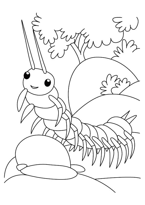The Centipede Insect Bug Coloring Pages Owl Coloring Pages Insect Coloring Pages