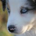 Ayla  http://hundesport-und-fotografie.jimdo.com/galerie/bilder/hunde/#