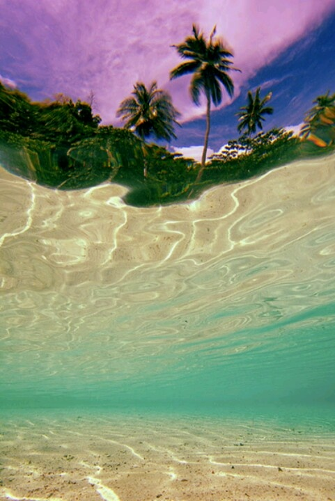 Water Beach Palm Trees Tropical Waves Trippy