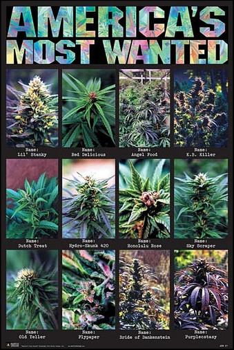 Americas Most Wanted Marijuana Poster www.trippystore.com/americas_most_wanted_marijuana_poster.html