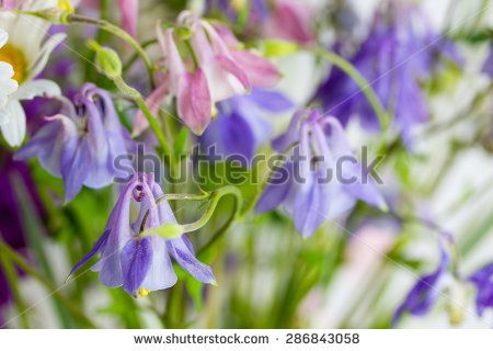 Beautiful background of lilac and pink wildflowers - stock photo