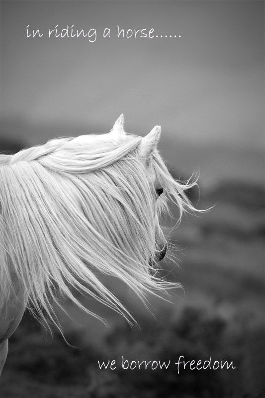 """Inspirational quote quotation, horse photo, """"in riding a horse we borrow freedom"""" 12x8 art print. £19.00, via Etsy."""
