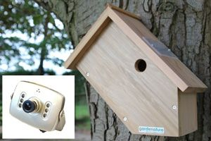 Side view bird box camera system