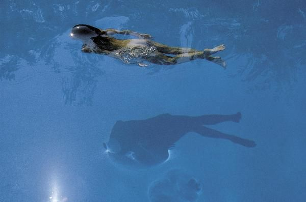 Photo & Contemporary - Swimming Pool - 1984