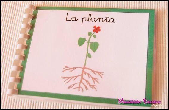 Manualidades Educativas: Botánica Montessori - Mini libro Nomenclatura de las partes de la planta - Imprimible Gratis