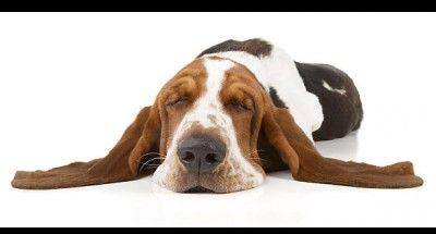 [EBOOK] Heftig: Mein Hund bellt ständig