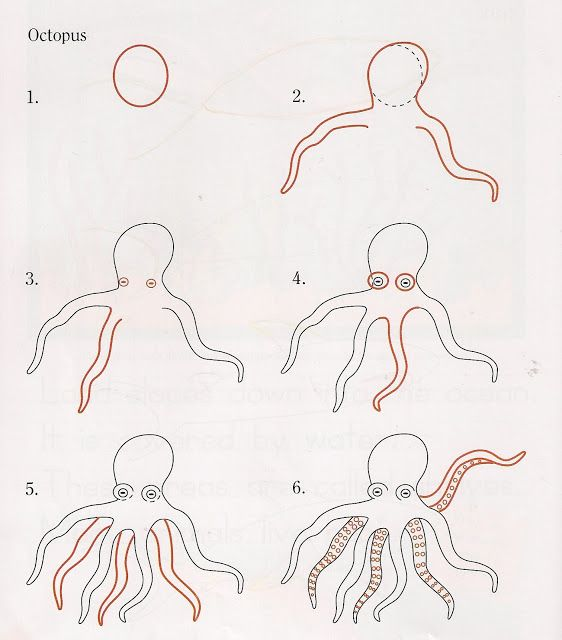 Compassion Family: How to Draw an Octopus