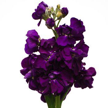 Whole White Alstrecia Flowers Royal Purple