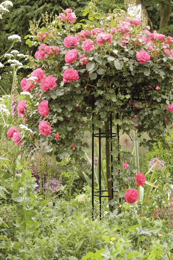 Umbrella rose supports provide practical and sturdy plant for Gartenanlage gestalten