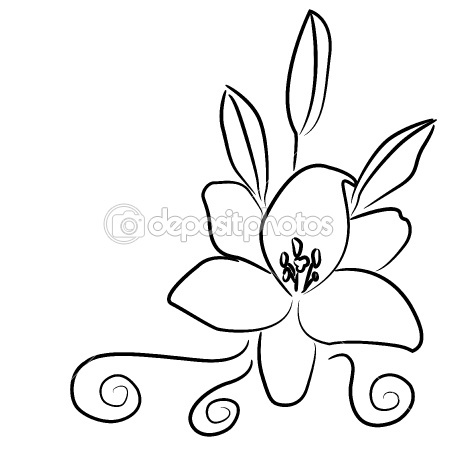 Lily, a black and white drawing — Stock Vector #7345486