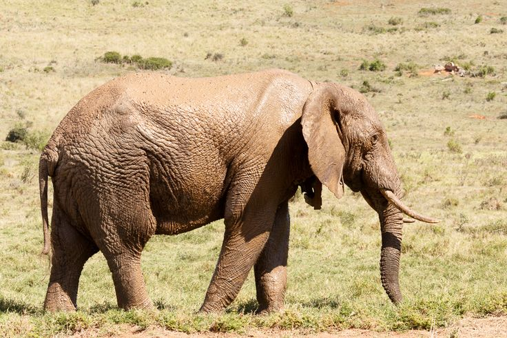 Elephant  Addo Elephant National Park is a diverse wildlife conservation park situated close to Port Elizabeth in South Africa and is one of the country's 19 national parks.