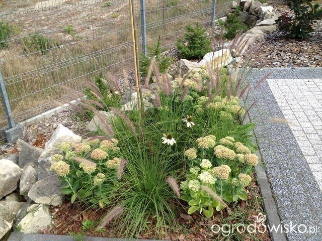 Umiejętne zestawianie roślin czyli co z czym pasuje - strona 8 - Forum ogrodnicze - Ogrodowisko