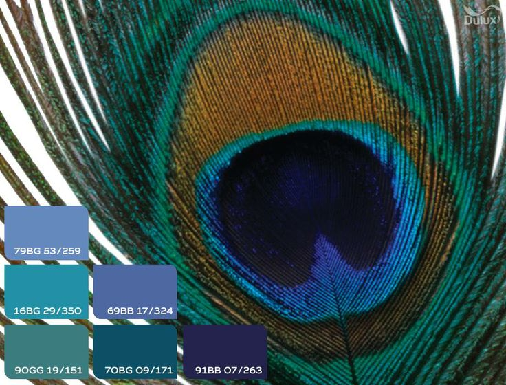 #dulux #homedecor #peacock #blue #green #seagreen #teal