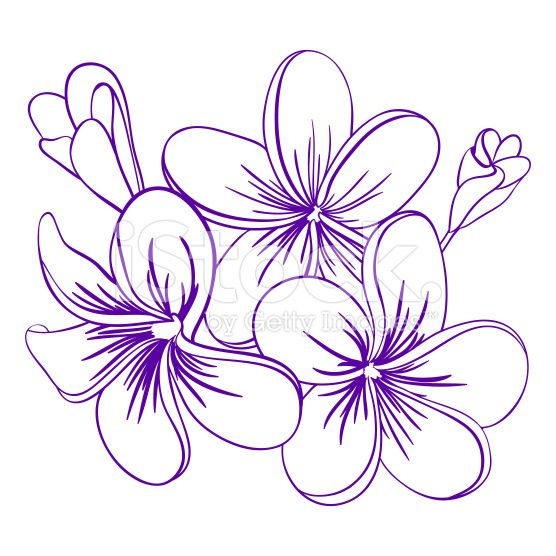 Tropical Flower Line Drawing : Best plumeria images on pinterest tattoo ideas
