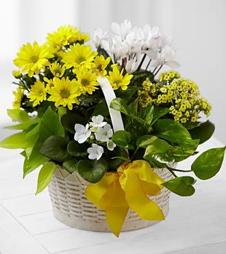 http://forum.iranjava.net/members/abirmalika.html#visitor_messaging Funeral Plants, Funeral Plants,Plants For Funerals,Funeral Plant,Common Funeral Plants,Popular Funeral Plants,Funeral Plants Names,Plants For Funeral,