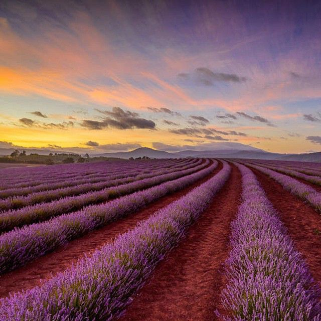 22 Reasons You Absolutely MUST Visit Australia in Your Lifetime