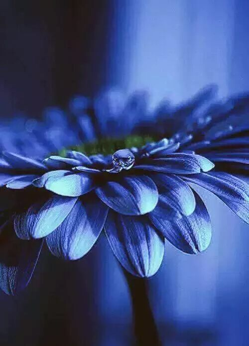 43 best images about The Most Beautiful Blue Flowers in ...