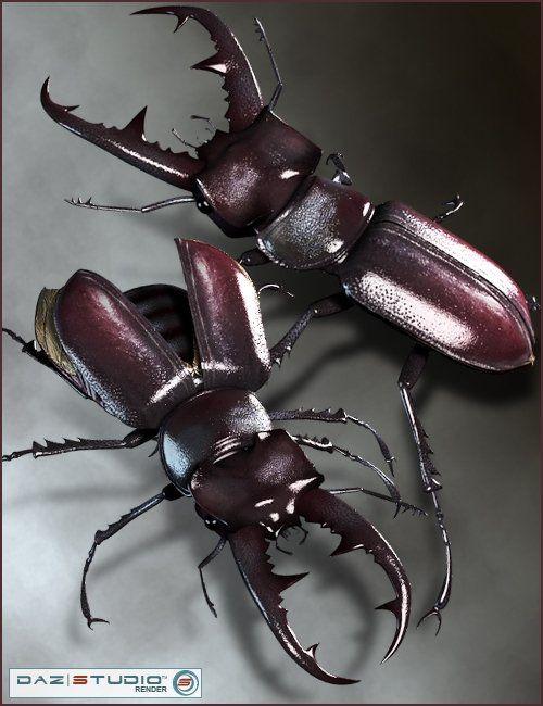 https://zonegfx.com/stag-beetle/