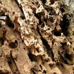 Cómo eliminar las termitas