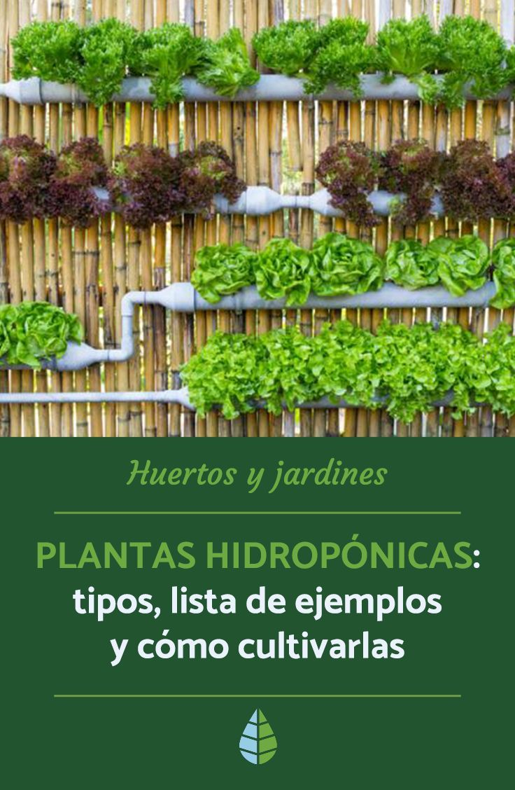 Hydroponic Plants Types List Of Examples And How To Grow In 2020 Plants Hydroponic Plants Herb Garden Planter