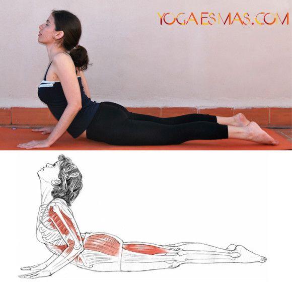 Posturas de yoga: La cobra - Bhujangasana