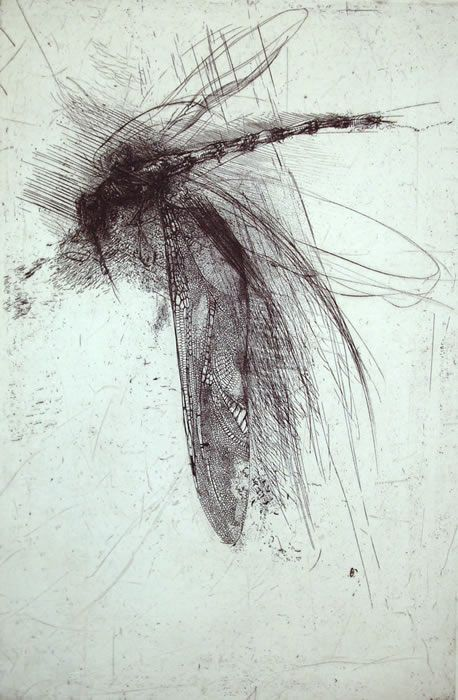 in flight        Lanfranco Quadrio(Italian, b.1966)  Dragonfly with large wing   1997  engraving