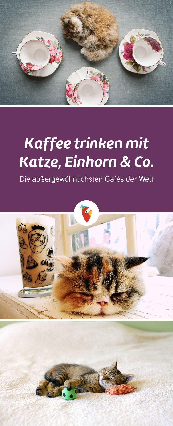 Wie HeiГџt Die Katze Von Alf