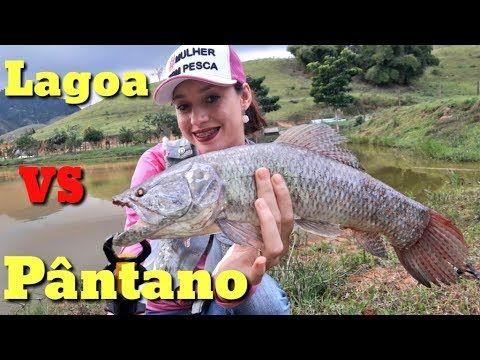 Pesca  de Traíra em Lagoa Abandonada - isca Zig Zarinha Nelson Nakamura  https://youtu.be/UkKQsXChVm8 #Traíra  #Fishing  #Fish #Pescaria #Pesca #Trairão #traira