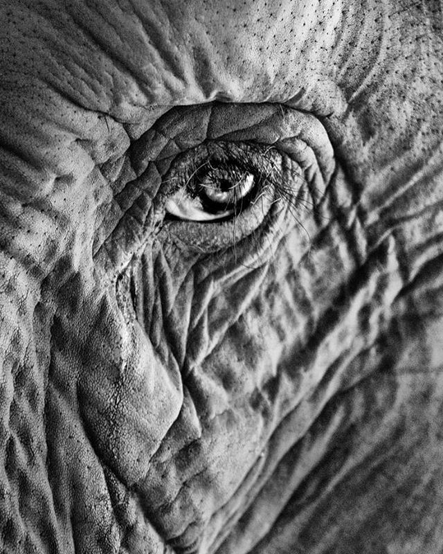 See a life-journey in an elephant's eye..   by Sarah Hosney Photography