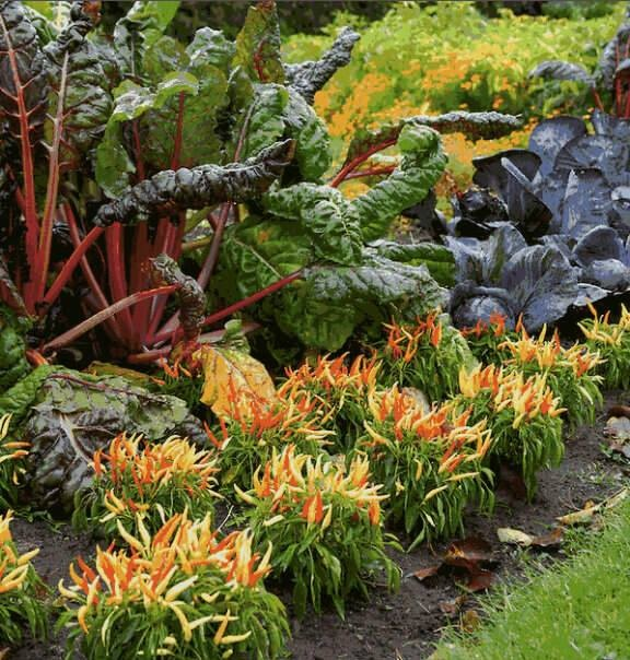 Homestead Gardens Landscaping: 77 Best Images About BackToEdenFilm Edible Landscaping