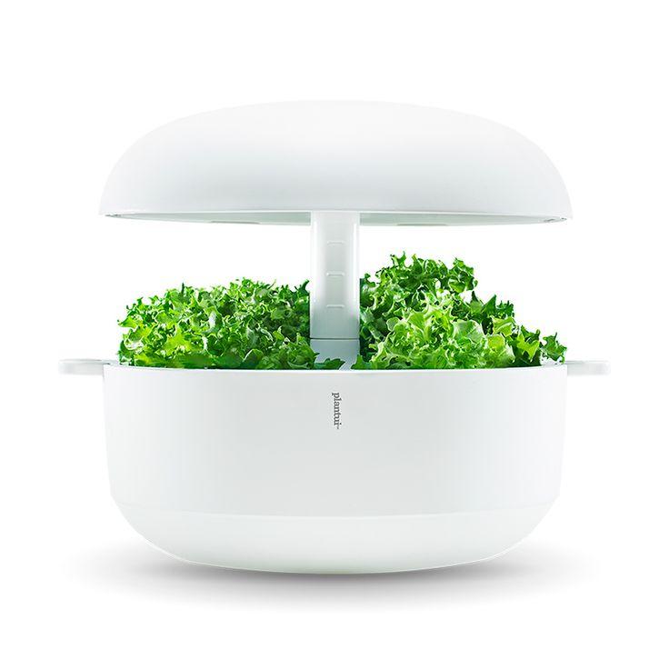 Die besten 25+ Hydrokultur garten Ideen auf Pinterest - indoor garten anlegen geeignete pflanzen