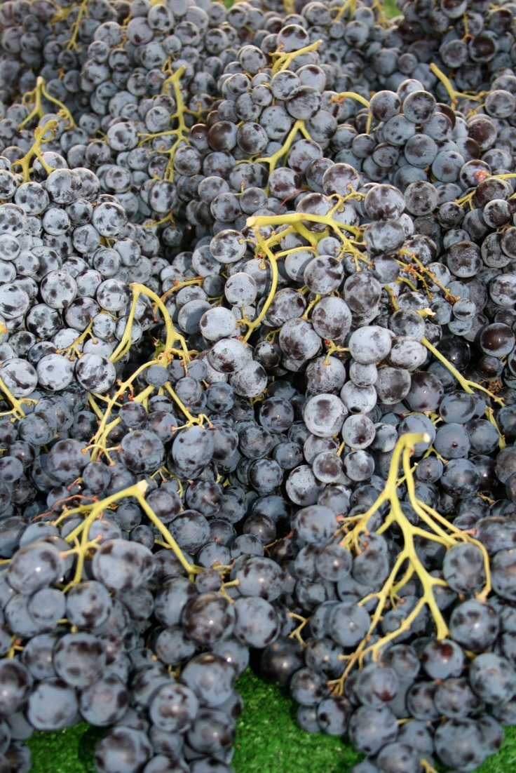 Surely the best grapes you've ever seen?