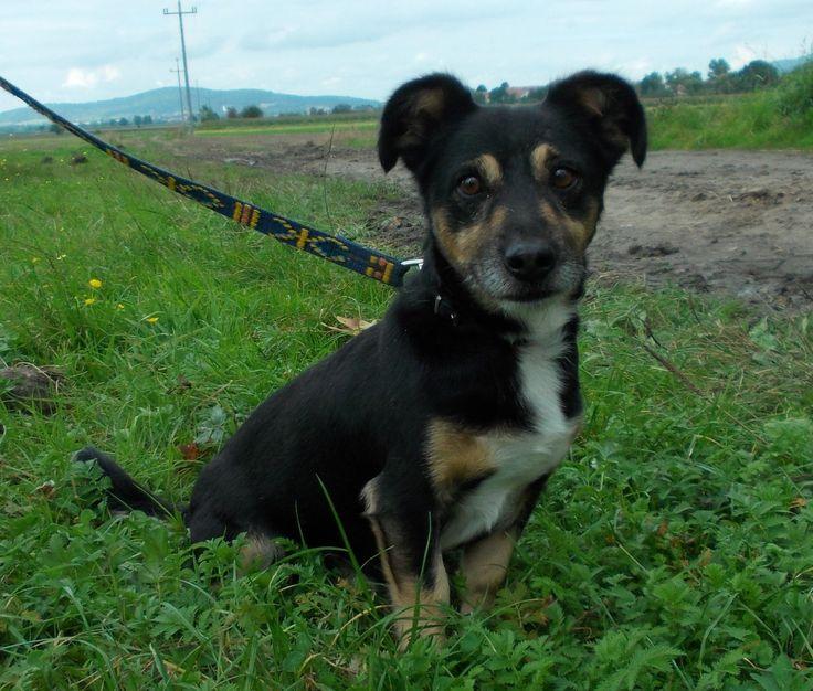Shadow - czeka na dom :) #dogs #adopt #shelter #help #psy #adopcje #schronisko #pomoc