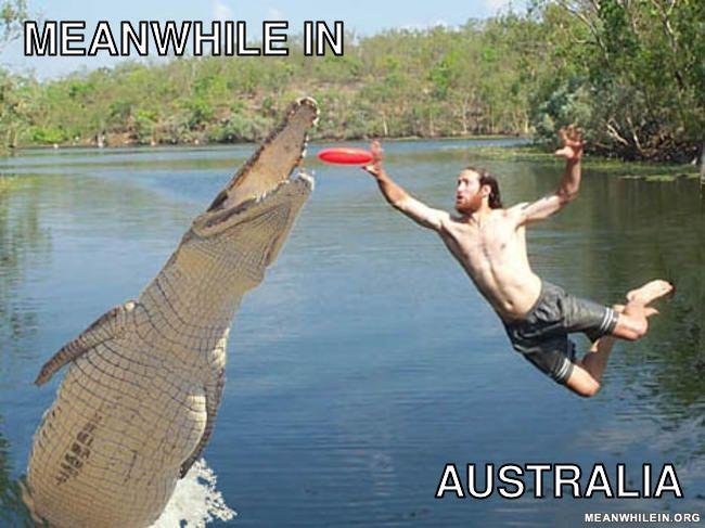 Croc Frisbee