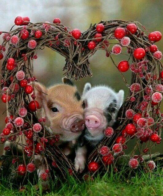 ❧Petits cochons ❧