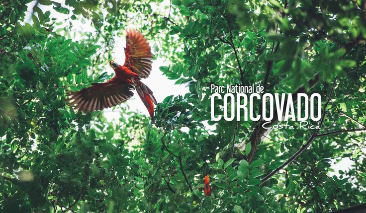 corcovado parc national costa rica blog voyage