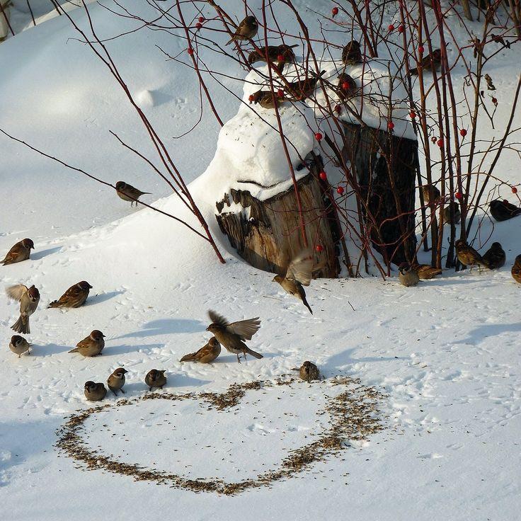 Ein Futter-Herz  für unsere Vögelchen im Winter .